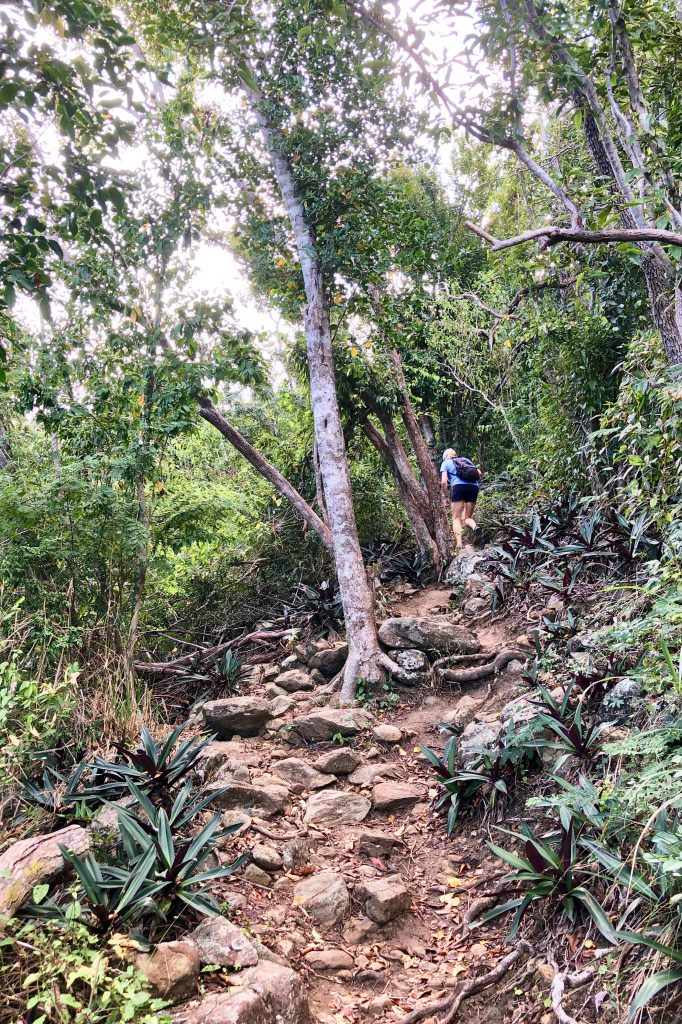 Hiking the Caneel Hill Trail St John USVI
