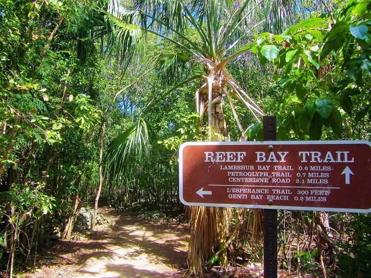 Reef Bay Trail St John USVI